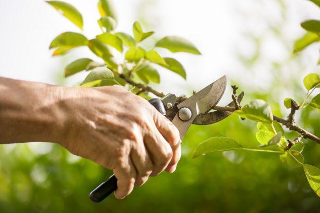 GaLaBau - Graeber Gartenbau Gartenpflege