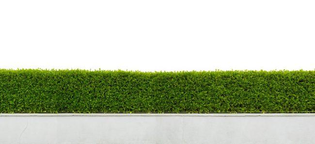 GaLaBau - Graeber Gartenbau Heckenschnitt